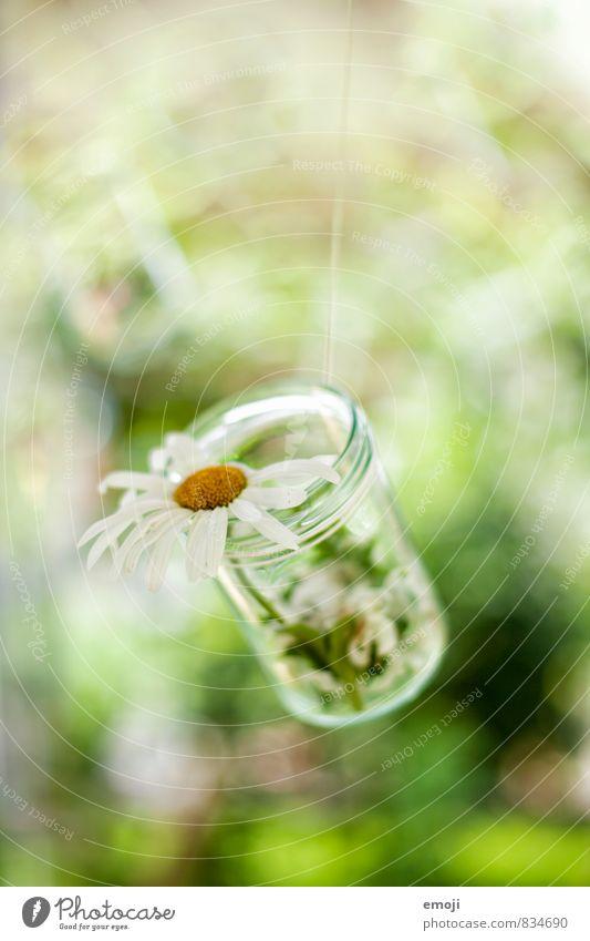 DIY Pflanze Blume natürlich grau Dekoration & Verzierung Glas Kitsch Grünpflanze selbstgemacht Krimskrams