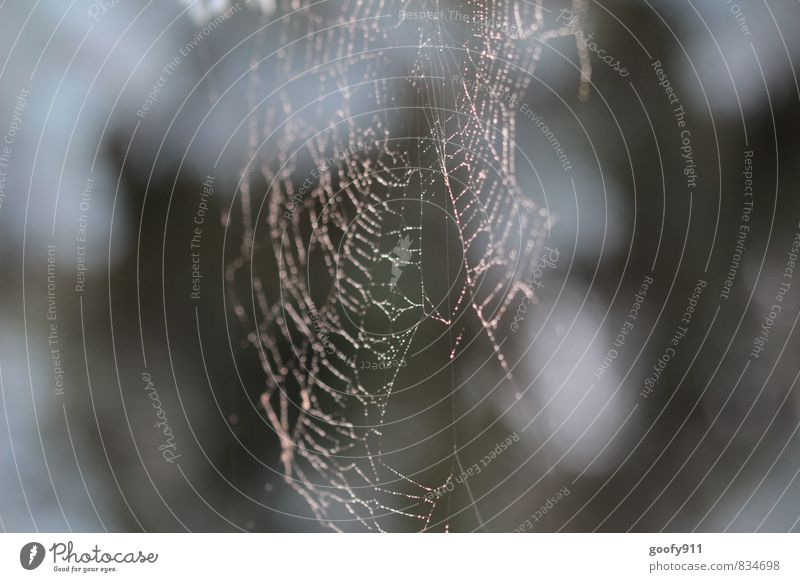 Morgentau Natur Wassertropfen Sommer Nebel Garten Spinne Zufriedenheit Netzwerk Außenaufnahme Nahaufnahme Unschärfe Schwache Tiefenschärfe Zentralperspektive
