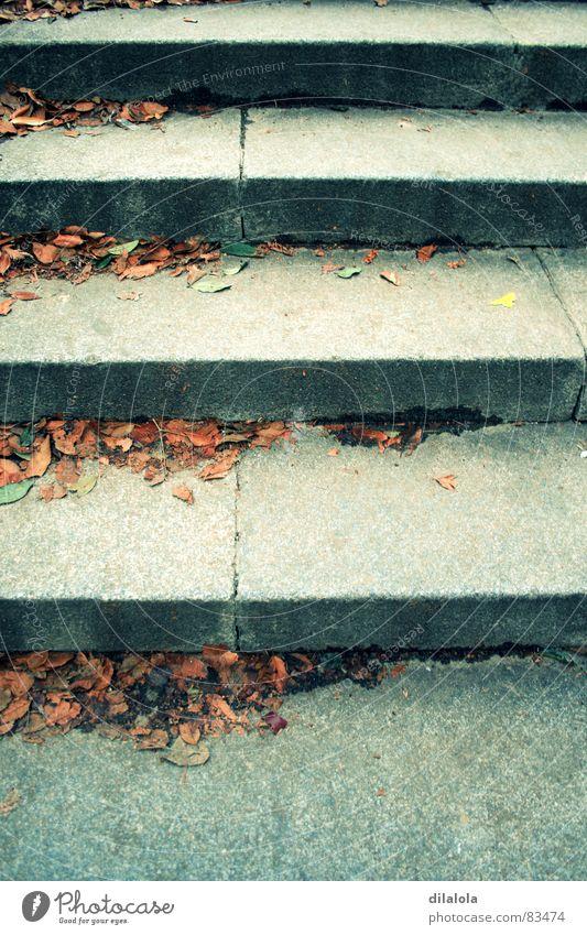 stairs schreiten Herbst Detailaufnahme Treppe upstairs fall-flowering downstairs down the stairs