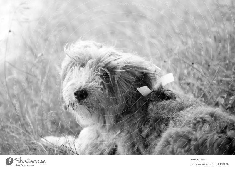 Hochzeitsgast Hund Natur Erholung Landschaft Tier Wiese Gras liegen Ausflug Fell Tiergesicht Geruch Haustier Treue Schleife