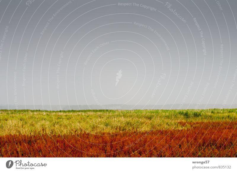 Boddenfarben Himmel Natur Pflanze Sommer rot Landschaft schwarz gelb Wiese Gras Küste natürlich grau Horizont bedrohlich Unwetter