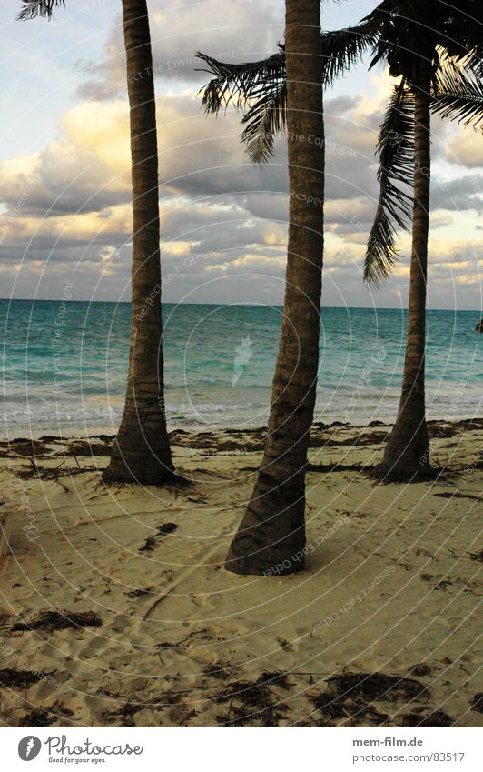 palmenstrand Meer Strand Ferien & Urlaub & Reisen Küste Insel Freizeit & Hobby Kuba Palme Sandstrand Kokosnuss Badestelle Kokospalme