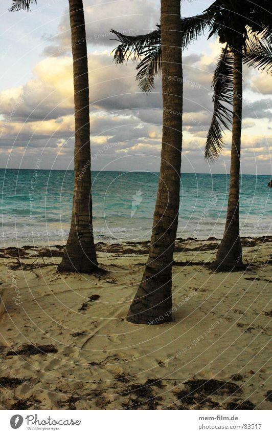 palmenstrand Palme Strand Meer Küste Sandstrand Ferien & Urlaub & Reisen Kuba Kokosnuss Badestelle Freizeit & Hobby Kokospalme Insel