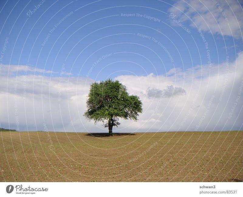 Toskanaweg Himmel Baum ruhig Ferne Horizont Italien dünn