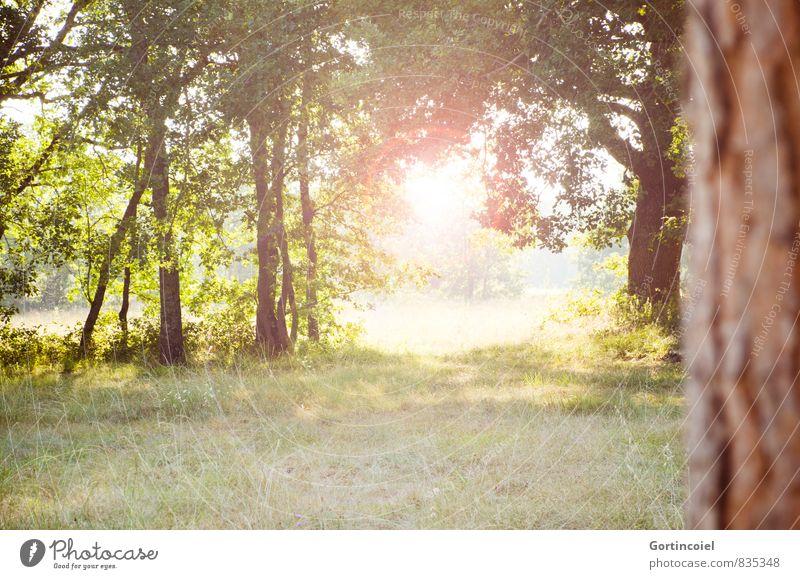 Neuer Tag Umwelt Natur Landschaft Sonne Sommer Schönes Wetter Baum hell schön Blendenfleck Morgen Gegenlicht Wiese Farbfoto mehrfarbig Außenaufnahme
