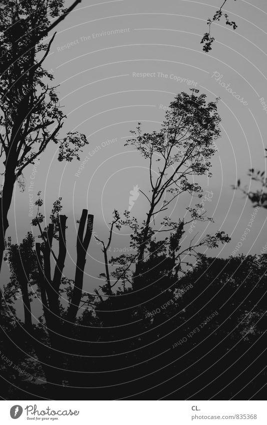 rückverzauberung Umwelt Natur Himmel Baum Sträucher Park Wald dunkel trist grau Baumstumpf Baumstamm Schwarzweißfoto Außenaufnahme Menschenleer Tag