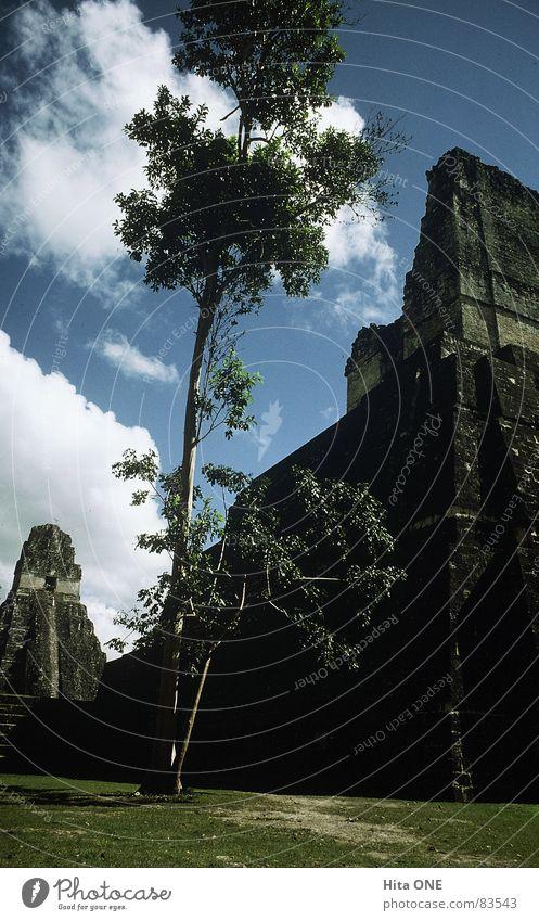 hoch hinaus Tempel Kultur Maya Stufen-Pyramide fortgeschritten unantastbar ehrwürdig Südamerika Baum Froschperspektive Wiese Gras heilig Ruine antik mystisch