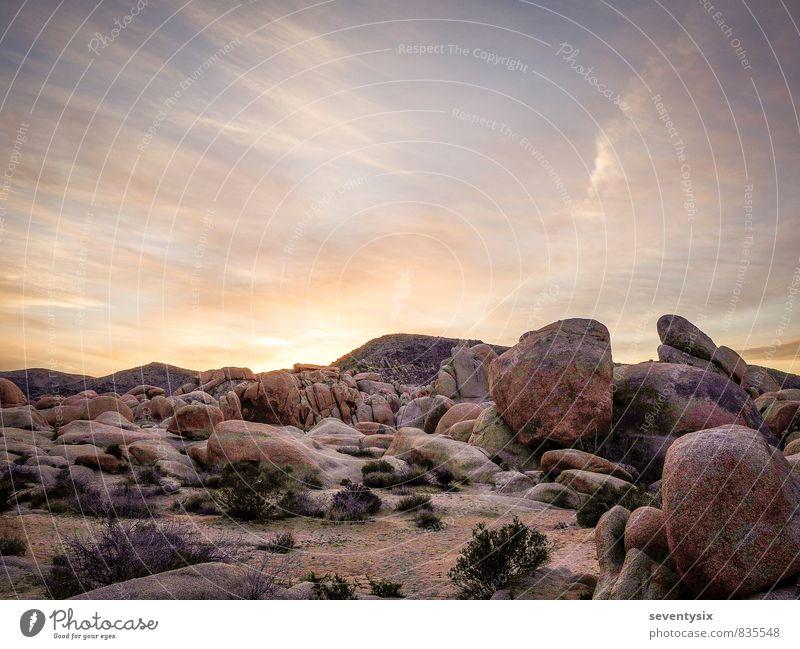 Sonnenaufgang über dem Joshua Tree Park, USA Ferien & Urlaub & Reisen Abenteuer Umwelt Natur Landschaft Pflanze Erde Sand Luft Himmel Wolken Horizont