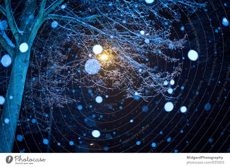 Nachtschnee Himmel Natur blau weiß Baum Erholung ruhig Winter dunkel schwarz kalt Traurigkeit Schnee Schneefall Eis Luft
