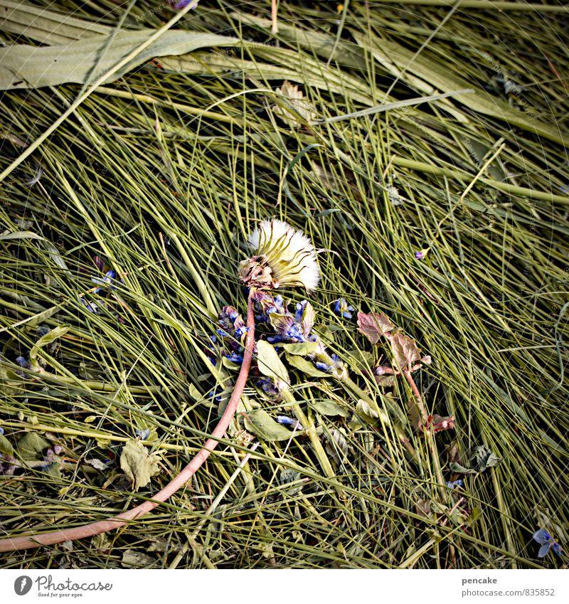 bizarr   schnittmuster Natur Urelemente Erde Sommer Gras Wiese Zeichen Duft Heu Löwenzahn Heuernte Schnittgut Schnittmuster Landwirtschaft Futter Farbfoto