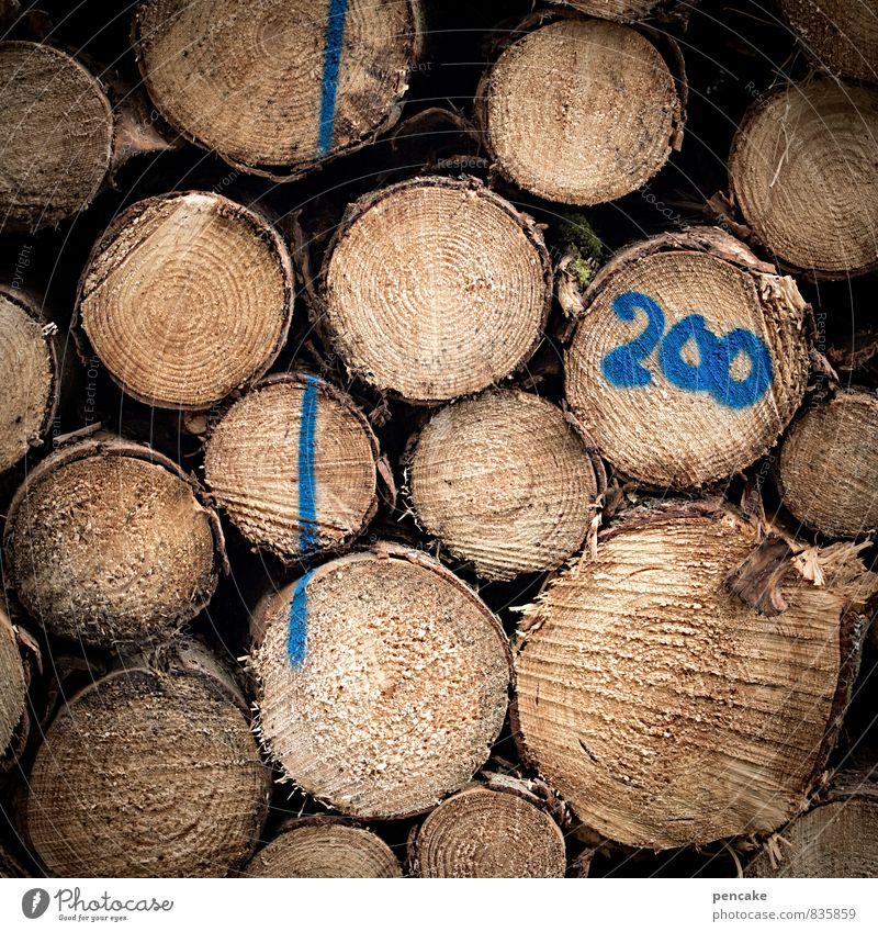 klafter Natur blau Sommer Baum Wald Umwelt Herbst Holz Linie Wachstum Energie Klima Zeichen Baumstamm Ende Duft