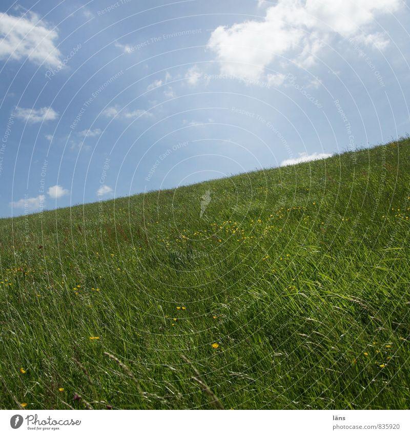 da ist der Deich Himmel Natur blau grün Landschaft Wolken Wiese Gras Wachstum Schönes Wetter Flussufer aufwärts abwärts aufsteigen steil Deich