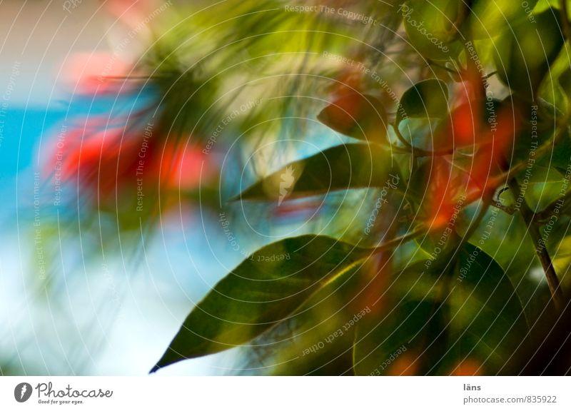 durchblick Ferien & Urlaub & Reisen Tourismus Umwelt Natur Pflanze Blume Blatt Blüte Grünpflanze Blühend Wachstum grün rot türkis Schwimmbad Durchblick