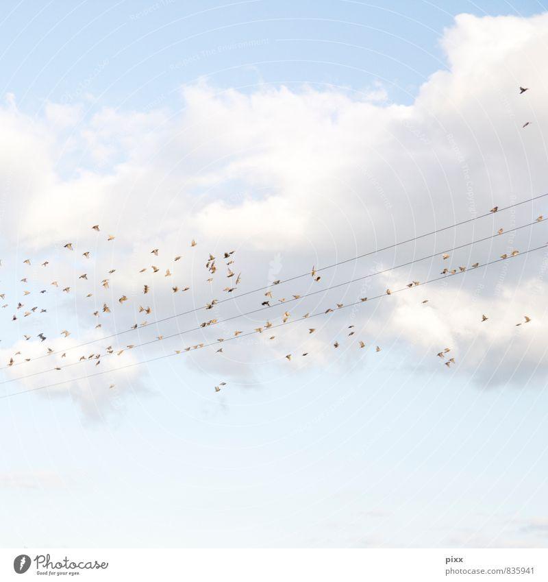 zuckerwattenlandung Ausflug Ferne Freiheit Natur Tier Luft Himmel Wolken Sonne Sommer Schönes Wetter Menschenleer Vogel Schwarm entdecken fliegen frei blau weiß