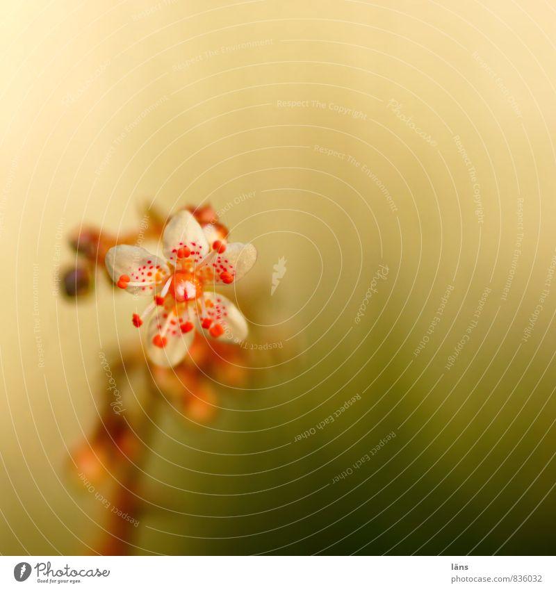 freistehend Natur Sommer Blume Wachstum Blühend einzigartig aufwärts Wildpflanze