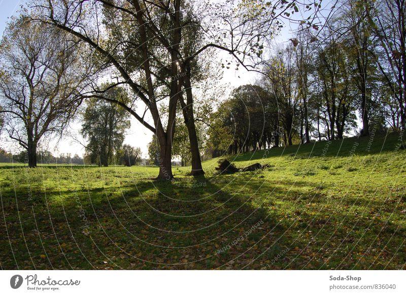 Rheinwiesen Zufriedenheit Sinnesorgane Erholung ruhig Ausflug Ferne Freiheit Landwirtschaft Forstwirtschaft Ruhestand Feierabend Umwelt Natur Landschaft Pflanze
