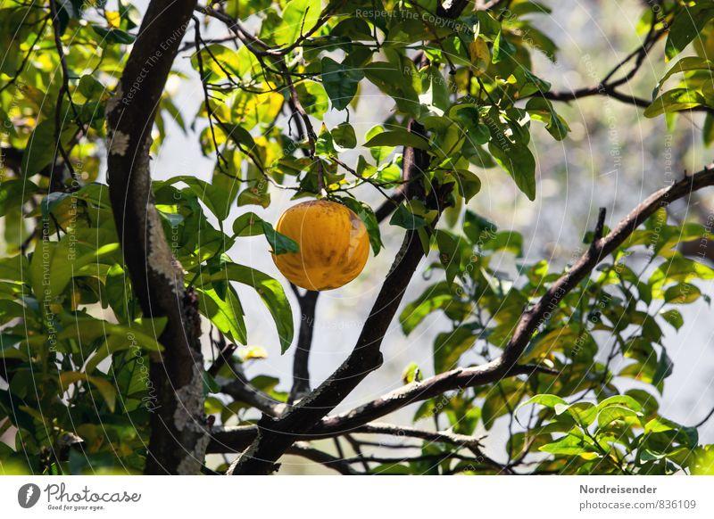 Trash 2015 | Grapefruit Lebensmittel Frucht Orange Bioprodukte Vegetarische Ernährung Diät Fasten Ferien & Urlaub & Reisen Ferne Sommer Pflanze Baum Nutzpflanze