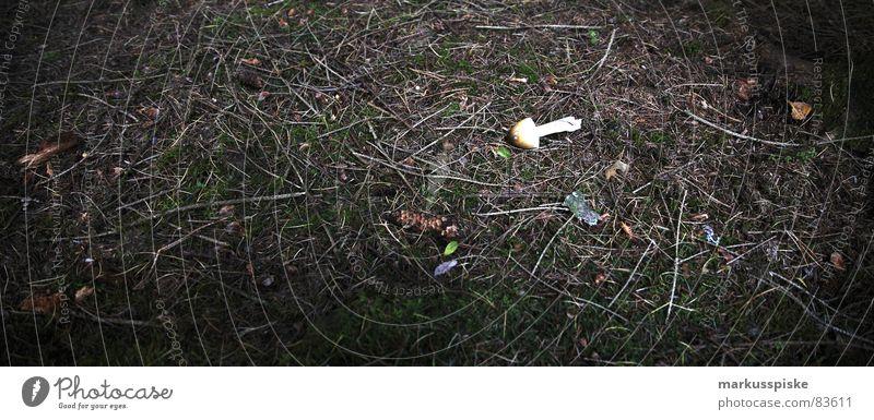 pilz gefunden... Ernährung Lebensmittel Stil Bodenbelag lecker Pilz Umwelt Gift Tannennadel Sporen Eukaryot Dickröhrling