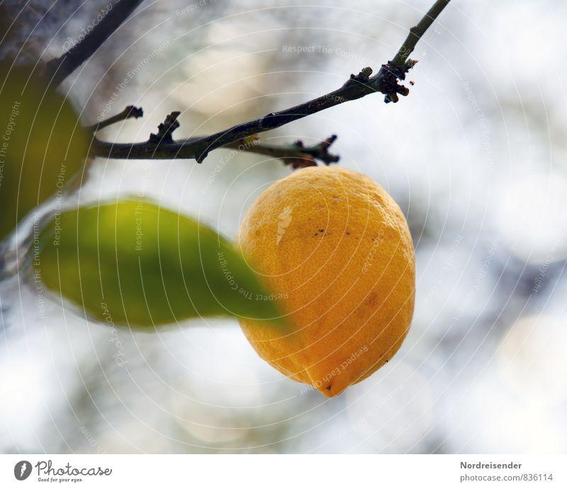 Trash 2015 | Zitrus Natur Ferien & Urlaub & Reisen Pflanze blau grün Farbe Sommer Baum Ferne gelb Gesundheit Lebensmittel Frucht Wachstum frisch rund
