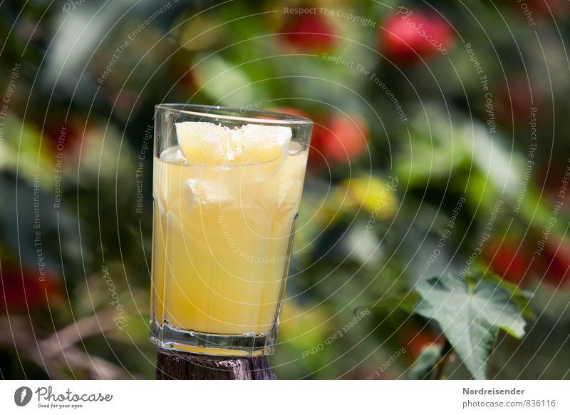 Erfrischung Lebensmittel Frucht Bioprodukte Diät Getränk Erfrischungsgetränk Limonade Glas exotisch Sommer Garten Duft Gesundheit sauer mehrfarbig gelb genießen