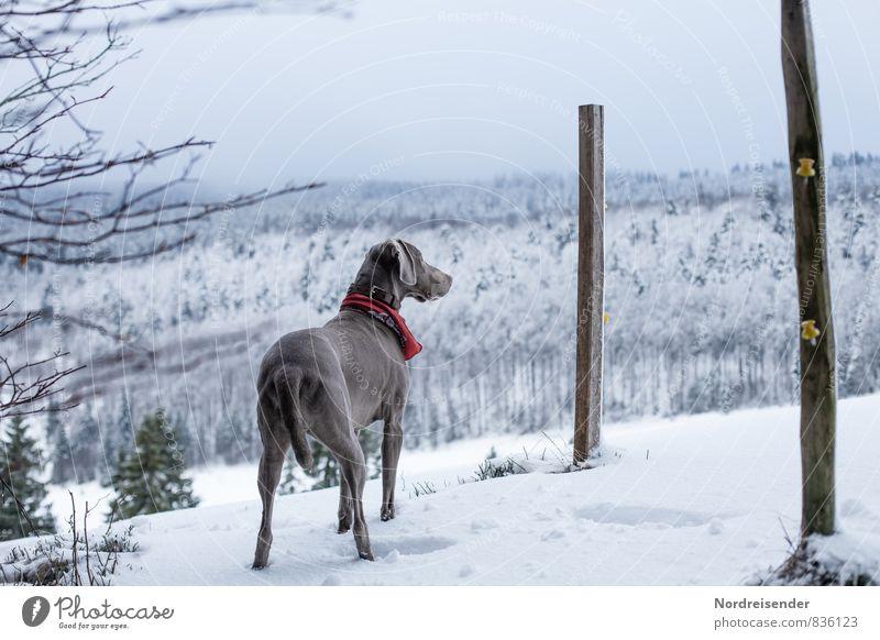 Tschüss, liebe Anne....wir werden dich vermissen Hund weiß Tier Winter kalt Schnee Eis warten beobachten Fitness Frost entdecken Wachsamkeit Jagd Haustier Stolz