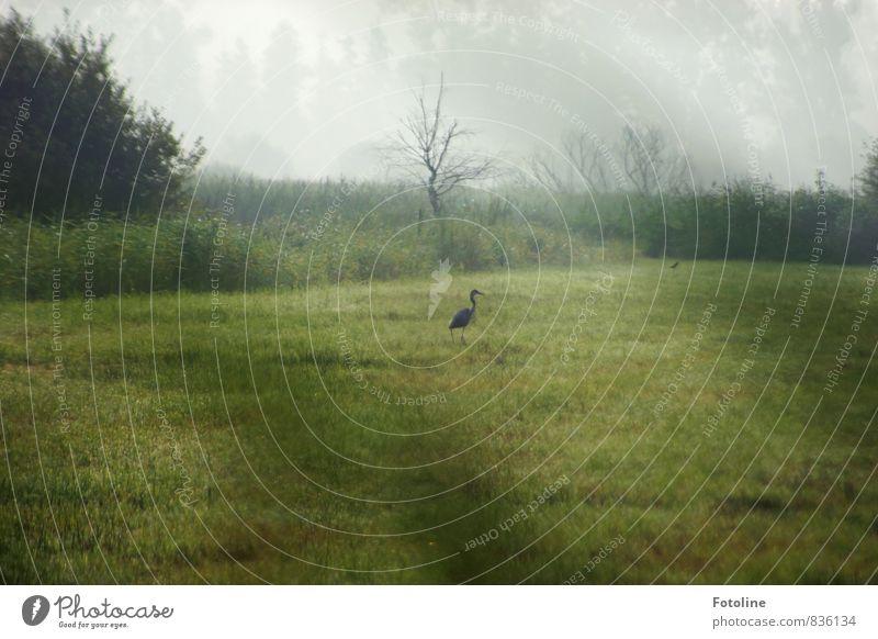 Nebelfrühstück Umwelt Natur Landschaft Pflanze Tier Sommer Baum Gras Sträucher Garten Park Wiese Wildtier Vogel 1 grün Reiher Farbfoto Gedeckte Farben