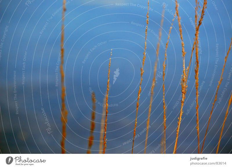 Wasser und Gras See Strand Abendsonne gelb Stengel Halm Wildnis Umwelt Vergänglichkeit Sand Küste Wind Natur gold orange Linie Strukturen & Formen büschel