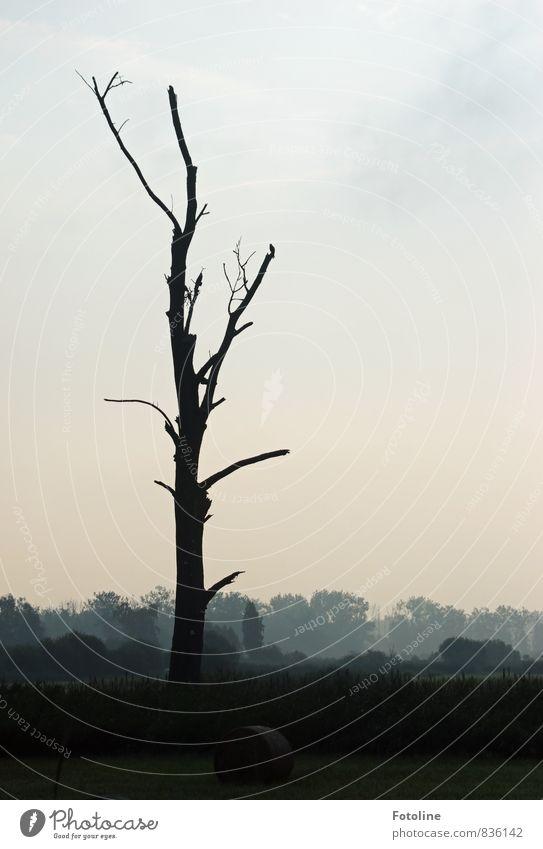 karg Umwelt Natur Landschaft Pflanze Himmel Sommer Baum Sträucher Wiese Feld Wald dunkel kalt natürlich schwarz weiß Heuballen Nebel Farbfoto Gedeckte Farben