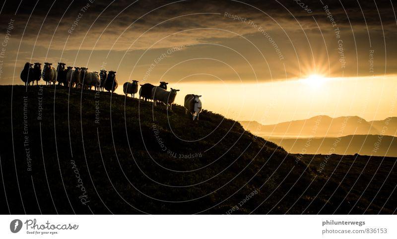 Bitte recht freundlich Himmel Natur Sommer Sonne Wolken Tier Umwelt Berge u. Gebirge Wiese Luft Zufriedenheit wandern Schönes Wetter Tiergruppe Abenteuer Hügel