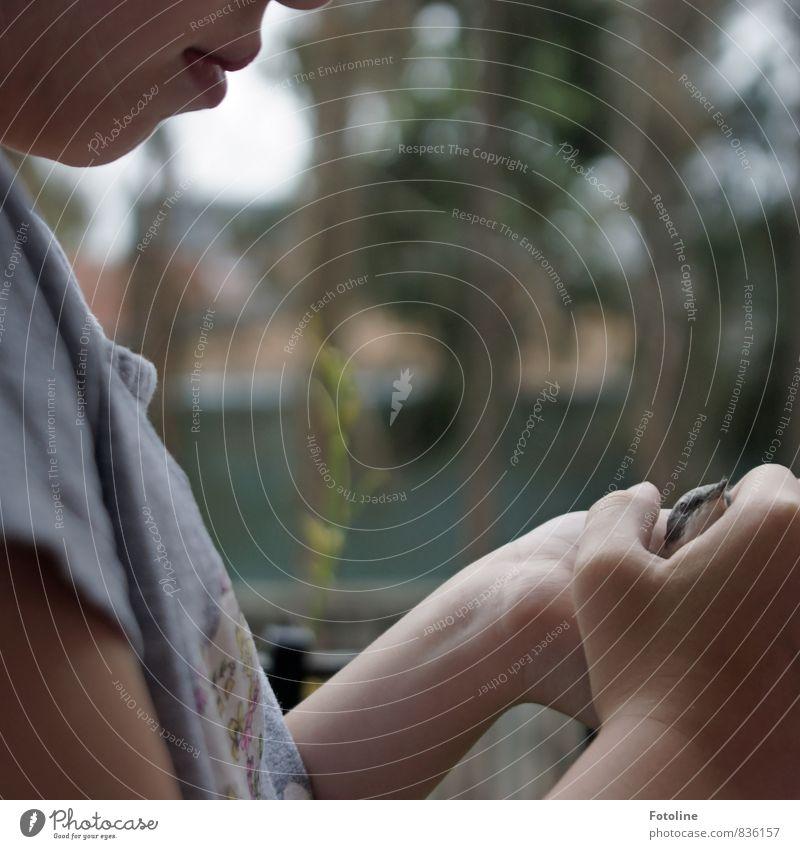 Kleiner Lebensretter Mensch feminin Kind Mädchen Kindheit Kopf Gesicht Mund Lippen Hand Finger 1 Tier Wildtier Vogel Tiergesicht klein natürlich Liebe Schutz