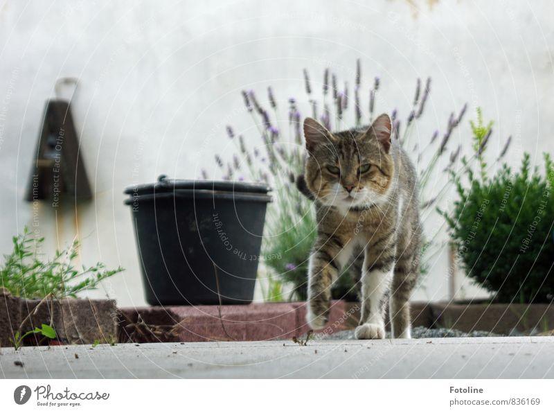 Hast du Futter? Katze Natur Pflanze Sommer Tier Umwelt natürlich Stein Garten Sträucher laufen Fell nah Tiergesicht Haustier Hauskatze