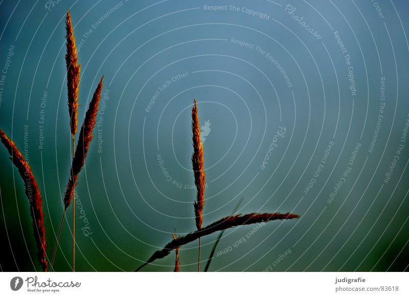 Wasser und Gras Natur Strand gelb See Sand Linie orange Küste Wind Umwelt gold Vergänglichkeit Spitze Stengel Halm
