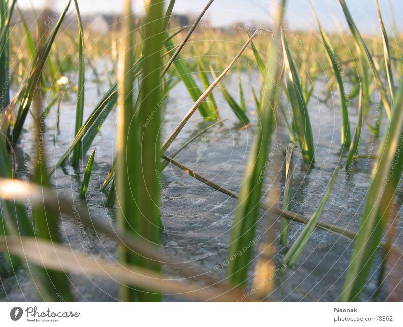 Graseis Wasser grün Winter Gras Eis Dorf gefroren