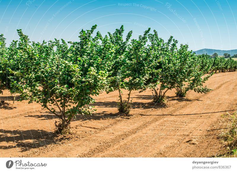 Natur Pflanze grün Farbe Sommer Baum Blatt Wald Herbst Blüte natürlich Garten Menschengruppe Frucht frisch Jahreszeiten