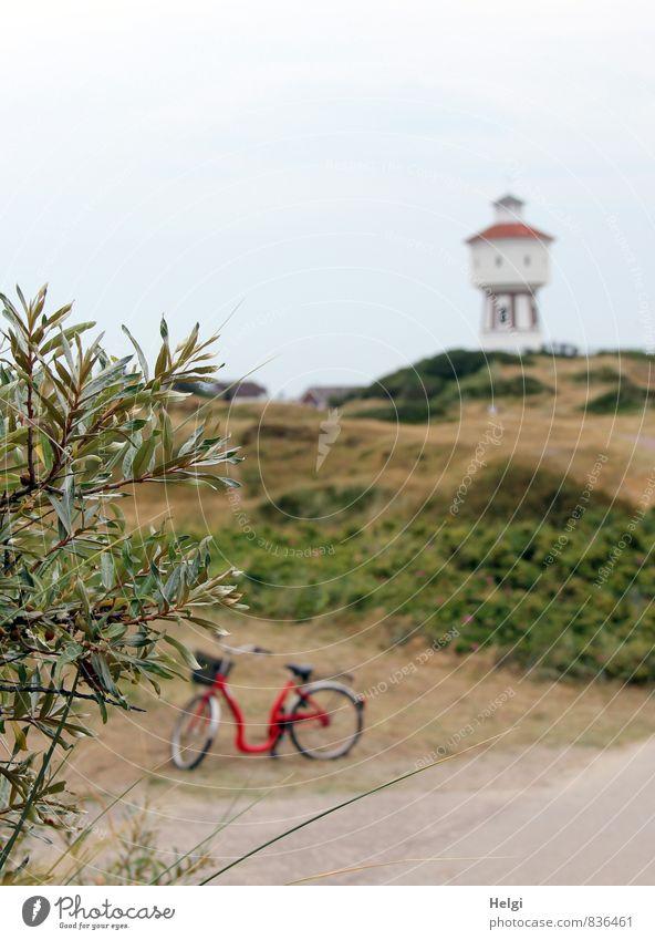 ...mit´m Radl da... Ferien & Urlaub & Reisen Tourismus Sommer Sommerurlaub Umwelt Natur Landschaft Pflanze Himmel Schönes Wetter Gras Sträucher Insel Langeoog