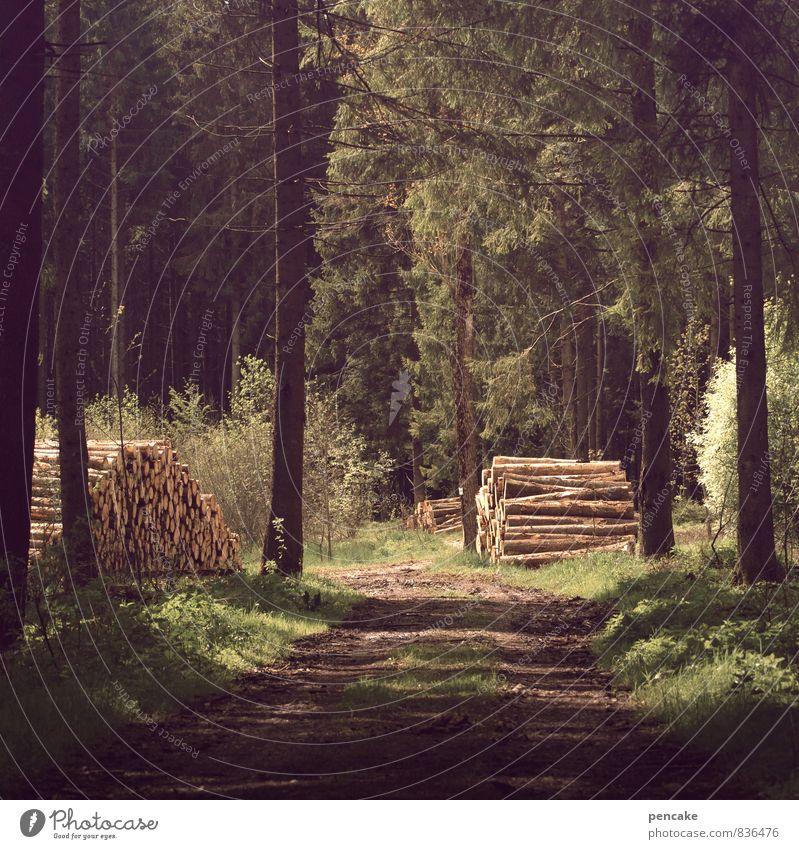 warmhalten Natur Sommer Erholung Landschaft Wald Wärme Wege & Pfade Erde Idylle Zufriedenheit Urelemente Fußweg Baumstamm gut Duft Wegbiegung