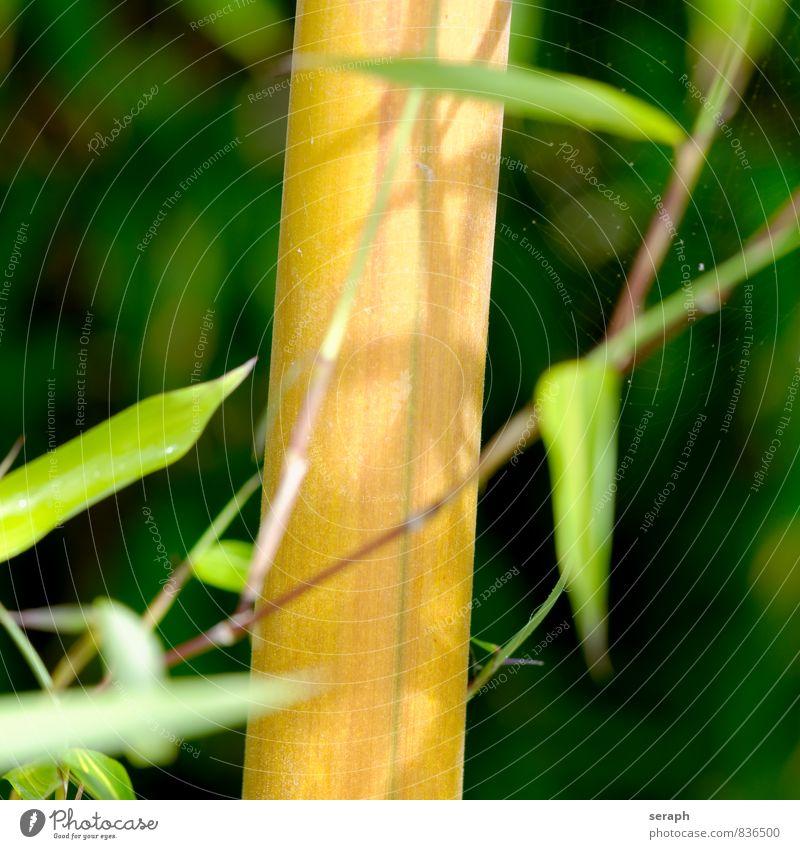 Bambus Natur Pflanze grün Blatt Gras Hintergrundbild Garten Wachstum frisch Sträucher Ast Asien Zweig Stengel exotisch Botanik