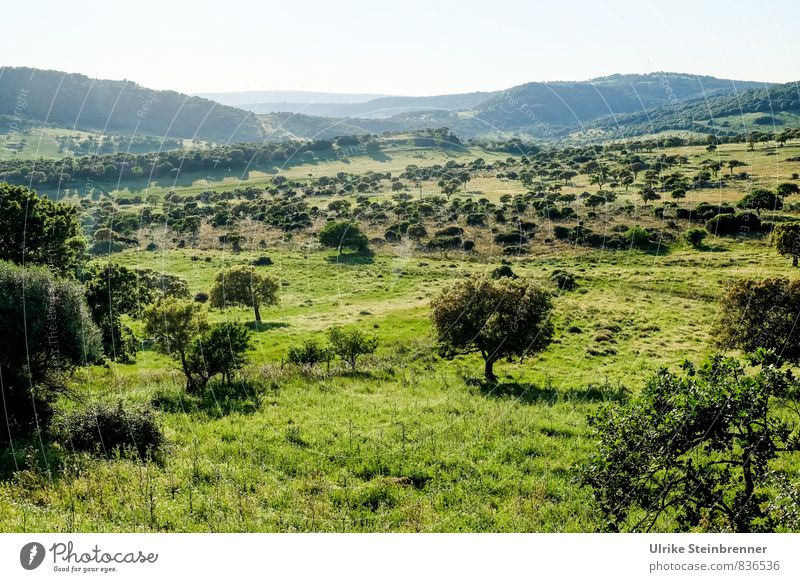 Landscape Umwelt Natur Landschaft Pflanze Erde Himmel Sonnenlicht Frühling Schönes Wetter Baum Gras Sträucher Wildpflanze Wiese Feld Wald Hügel Berge u. Gebirge