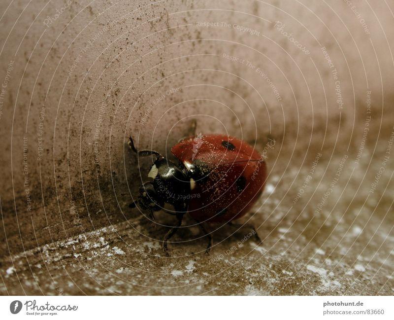 Ladybird Makroaufnahme Schiffsbug Insekt Marienkäfer Käfer ladybird insects