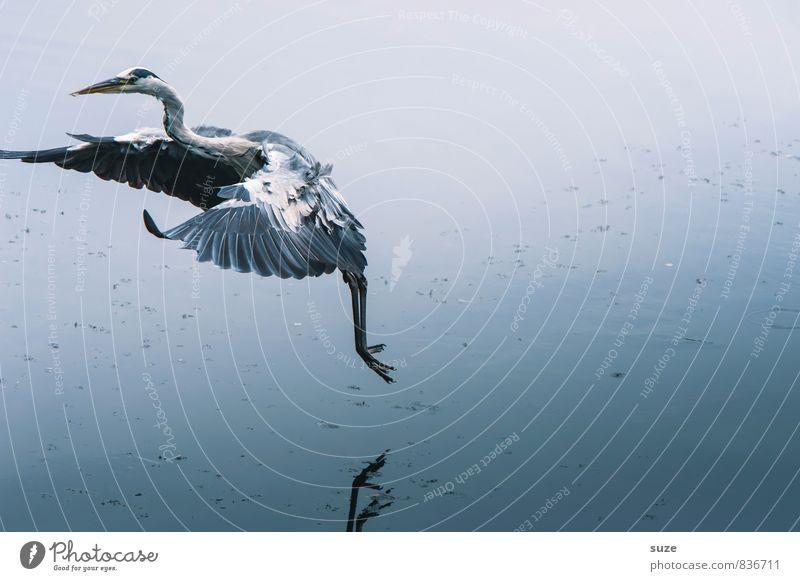 Herr der 7 Teiche Natur blau Wasser Landschaft Tier kalt Umwelt natürlich See fliegen Vogel elegant wild Wildtier frei authentisch