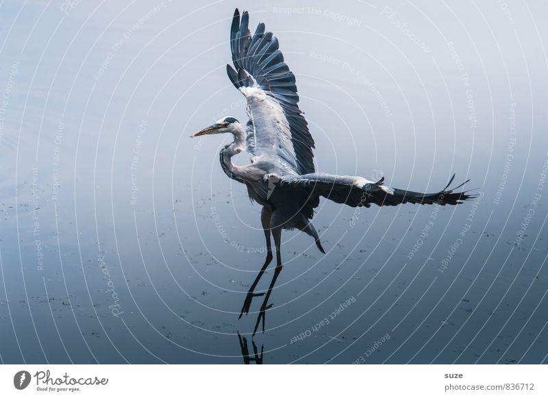*2.900* Der Solist Natur blau Wasser Landschaft Tier kalt Umwelt natürlich See fliegen Vogel elegant wild Wildtier frei authentisch