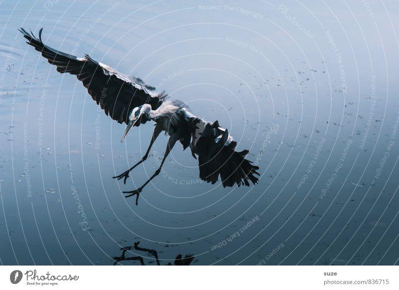 Wasserballerino Natur blau schön Landschaft Tier kalt Umwelt natürlich See fliegen Vogel elegant wild Wildtier authentisch