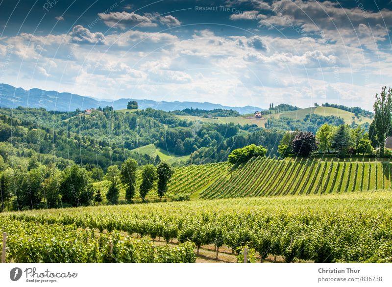 Steirische Toskana Himmel Natur Ferien & Urlaub & Reisen Sommer Baum Erholung Landschaft Wolken Berge u. Gebirge Umwelt Wiese Zufriedenheit Tourismus Feld