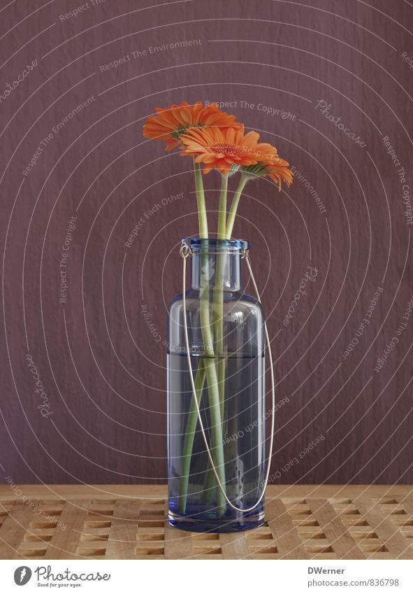 Gerbera Pflanze schön Blume Umwelt Wand Mauer Kunst orange Wachstum elegant leuchten frisch Fröhlichkeit Blühend violett Blumenstrauß