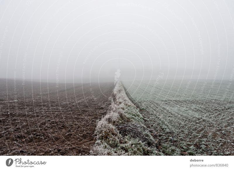 Der Blick auf ein frostiges Feld an einem nebligen Wintermorgen. Nebelstimmung kalt gefroren Eisfläche Traurigkeit