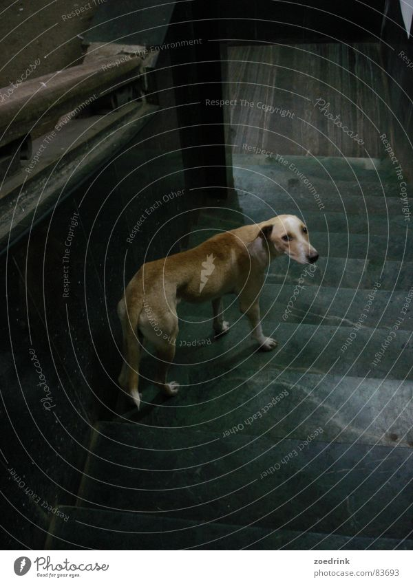 breakup Trauer Verzweiflung Säugetier Moral dog sad loneliness downstairs steps waiting hope leave Abschied