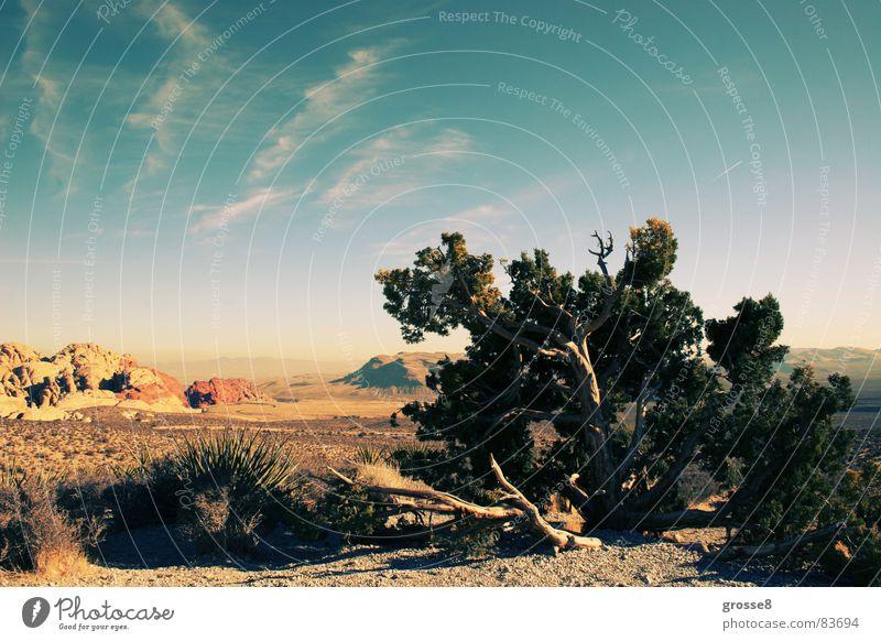 Red Rock Nevada Red Rock Canyon Baum Las Vegas Winter Wüste Sonne Blauer Himmel Berge u. Gebirge