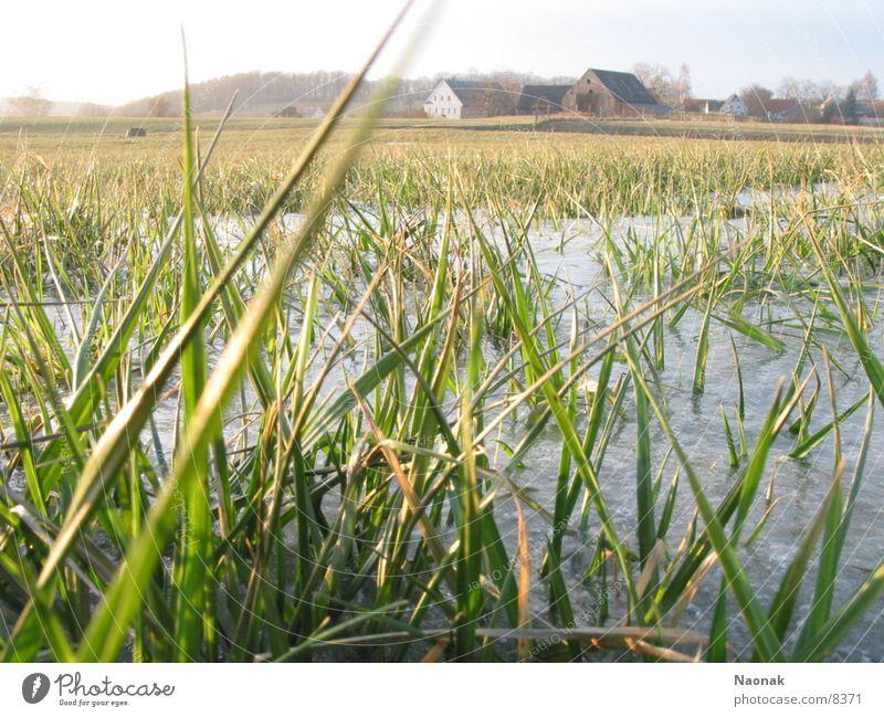 Eisgras Winter Gras Eis Dorf