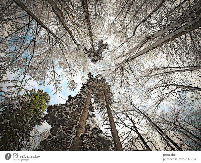 bizarr | augenreise Himmel Ferien & Urlaub & Reisen Baum Wolken Winter Wald Schnee Eis Urelemente Wandel & Veränderung Zeichen Frost Baumkrone Inspiration Geäst