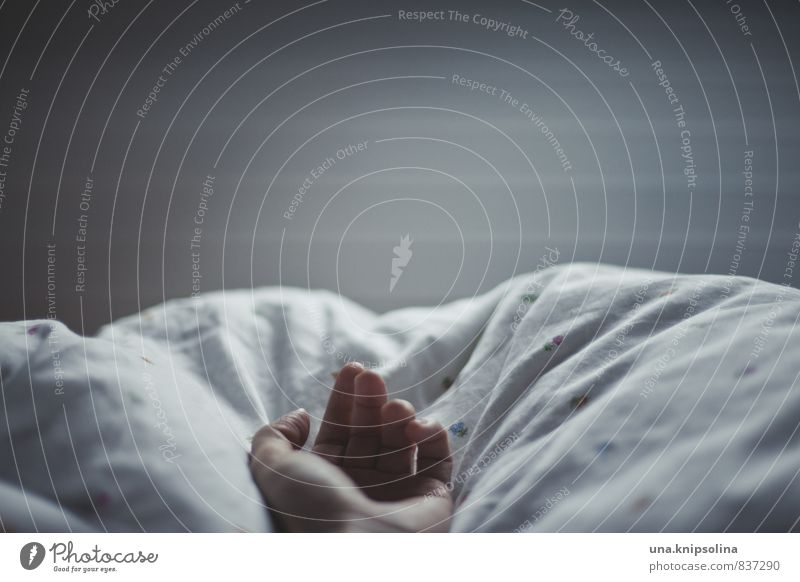 guten abend, gute nacht. Häusliches Leben Bett Schlafzimmer Bettdecke Kissen Frau Erwachsene Hand 1 Mensch 18-30 Jahre Jugendliche liegen schlafen weich Gefühle